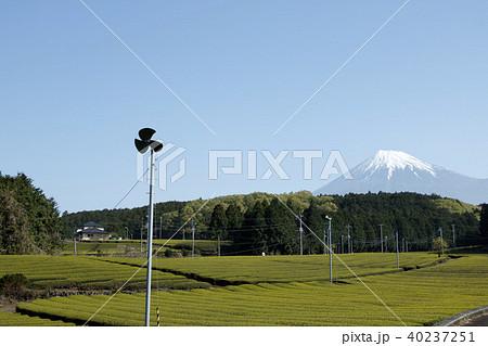 絶景風景(静岡県、茶畑、春) 40237251