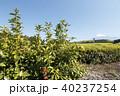 茶畑 静岡 風景の写真 40237254