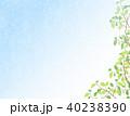 植物 40238390