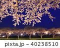 桜並木 桜 筑前町の写真 40238510