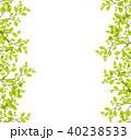 植物 40238533