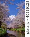 忍野八海 富士山と桜 40239128