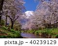 忍野八海 富士山と桜 40239129