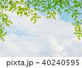 新緑 40240595