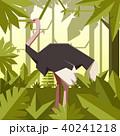 ジャングル 密林 ベクターのイラスト 40241218