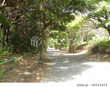 光と影の樹木のトンネル 40241973
