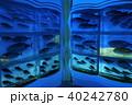 氷の水族館 40242780