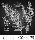 花柄 ハーブ ローズマリーのイラスト 40244175