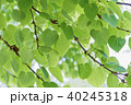 ハートの葉形 新緑エコイメージ 40245318
