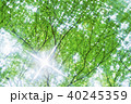 新緑 葉 春の写真 40245359