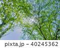 ハートの形 新緑エコイメージ 40245362