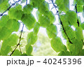 ハートの形 新緑エコイメージ 40245396