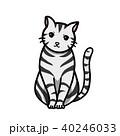 猫 40246033