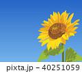 向日葵 ひまわり 花のイラスト 40251059