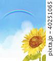 向日葵 ひまわり 花のイラスト 40251065