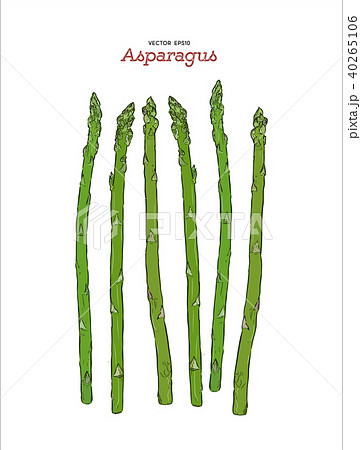 Hand drawn sketch style asparagus vector. 40265106