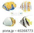 モザイク 熱帯魚 セットのイラスト 40268773