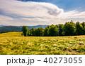 beech forest on grassy hillside 40273055