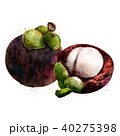 まんごすちん マンゴスチン マンゴスティンのイラスト 40275398