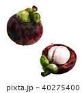 まんごすちん マンゴスチン マンゴスティンのイラスト 40275400