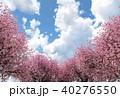 桜 青空 春のイラスト 40276550