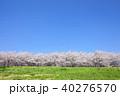 桜 草原 樹木の写真 40276570