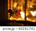 一輪の花とライトアップ 40281741