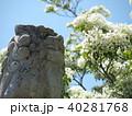なんじゃもんじゃの花 40281768