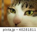 猫の鼻に水滴 40281811