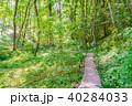 新緑 森林 植物の写真 40284033