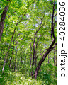 新緑 森林 植物の写真 40284036