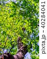 新緑 森林 植物の写真 40284041