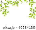 葉 枝 葉っぱのイラスト 40284135