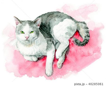 水彩で描いた白とグレーの猫 40285061