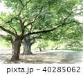木 新緑 公園のイラスト 40285062