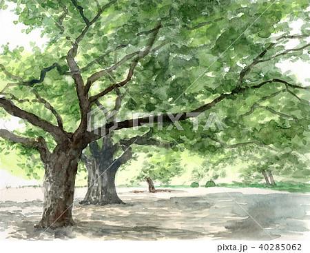 水彩で描いた英国式庭園の風景画 40285062