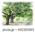 木 新緑 公園のイラスト 40285063