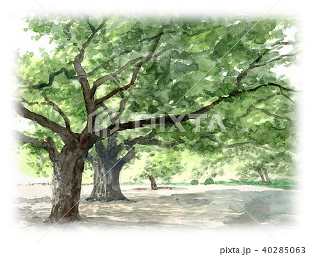 水彩で描いた英国式庭園の風景画 40285063