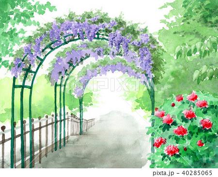 水彩で描いた藤のアーチの風景画 40285065