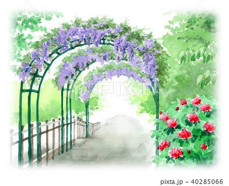 水彩で描いた藤のアーチの風景画 40285066