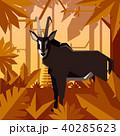 ジャングル 密林 トロピカルのイラスト 40285623