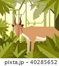 ジャングル 密林 トロピカルのイラスト 40285652