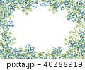 葉 枝 フレームのイラスト 40288919