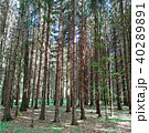 Perspective view into the forest 40289891