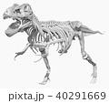 ティラノサウルスの全身骨格 40291669