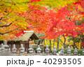 京都 化野念仏寺 秋の写真 40293505