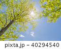 新緑 太陽光 日差しの写真 40294540