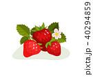 いちご イチゴ 苺のイラスト 40294859