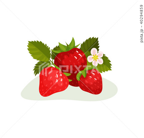 Ripe strawberry with green leaves and blooming flower. Sweet summer berry. Flat vector element for 40294859