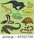 両生類 動物 ベクタのイラスト 40302790